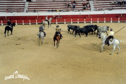 Spectacle-equestre-Palavas-1
