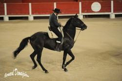 Spectacle-equestre-Palavas-11