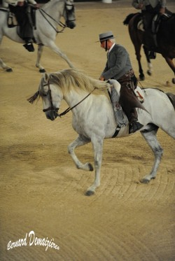 Spectacle-equestre-Palavas-14