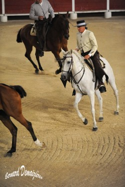 Spectacle-equestre-Palavas-15