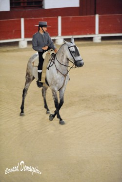 Spectacle-equestre-Palavas-21