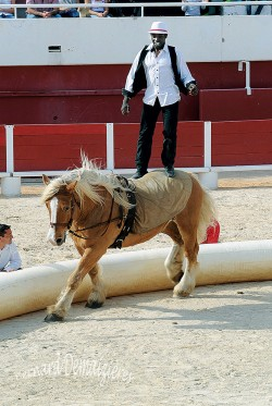 Spectacle-equestre-Palavas-25
