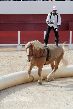 Spectacle-equestre-Palavas-27