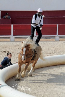 Spectacle-equestre-Palavas-28