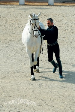 Spectacle-equestre-Palavas-32
