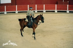 Spectacle-equestre-Palavas-33