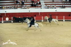 Spectacle-equestre-Palavas-34