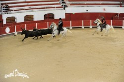 Spectacle-equestre-Palavas-35