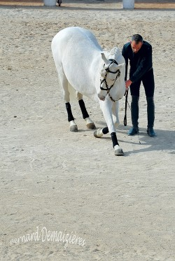 Spectacle-equestre-Palavas-37