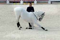 Spectacle-equestre-Palavas-38