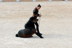 Spectacle-equestre-Palavas-39