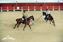 Spectacle-equestre-Palavas-40