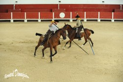 Spectacle-equestre-Palavas-41