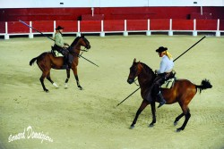 Spectacle-equestre-Palavas-42