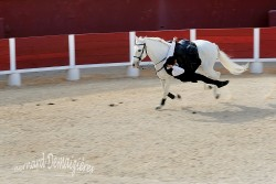 Spectacle-equestre-Palavas-45