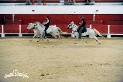 Spectacle-equestre-Palavas-46