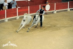 Spectacle-equestre-Palavas-47