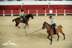 Spectacle-equestre-Palavas-5