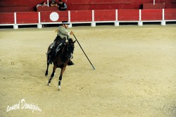 Spectacle-equestre-Palavas-50