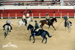 Spectacle-equestre-Palavas-51