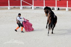 Spectacle-equestre-Palavas-52