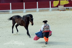 Spectacle-equestre-Palavas-53