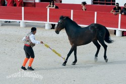 Spectacle-equestre-Palavas-54