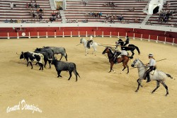 Spectacle-equestre-Palavas-56