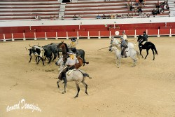 Spectacle-equestre-Palavas-57