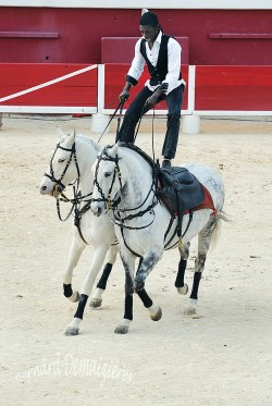 Spectacle-equestre-Palavas-62