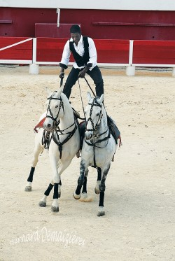 Spectacle-equestre-Palavas-63