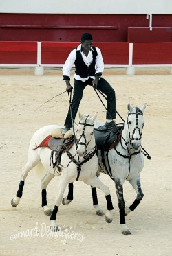 Spectacle-equestre-Palavas-64
