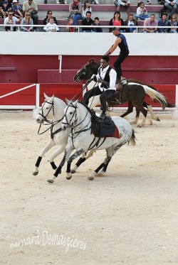 Spectacle-equestre-Palavas-65