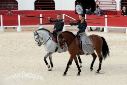 Spectacle-equestre-Palavas-72