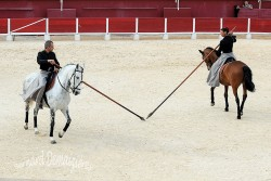 Spectacle-equestre-Palavas-75