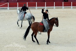 Spectacle-equestre-Palavas-76