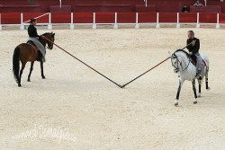 Spectacle-equestre-Palavas-77
