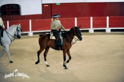 Spectacle-equestre-Palavas-8