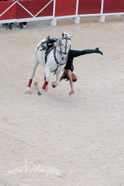 Spectacle-equestre-Palavas-84