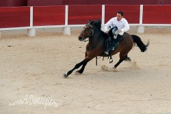 Spectacle-equestre-Palavas-86