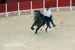Spectacle-equestre-Palavas-87