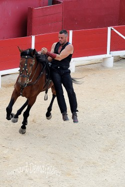 Spectacle-equestre-Palavas-88