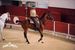 Spectacle-equestre-Palavas-9