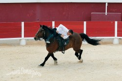 Spectacle-equestre-Palavas-99